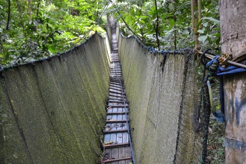 Que Faire Dans La Jungle Peruvienne