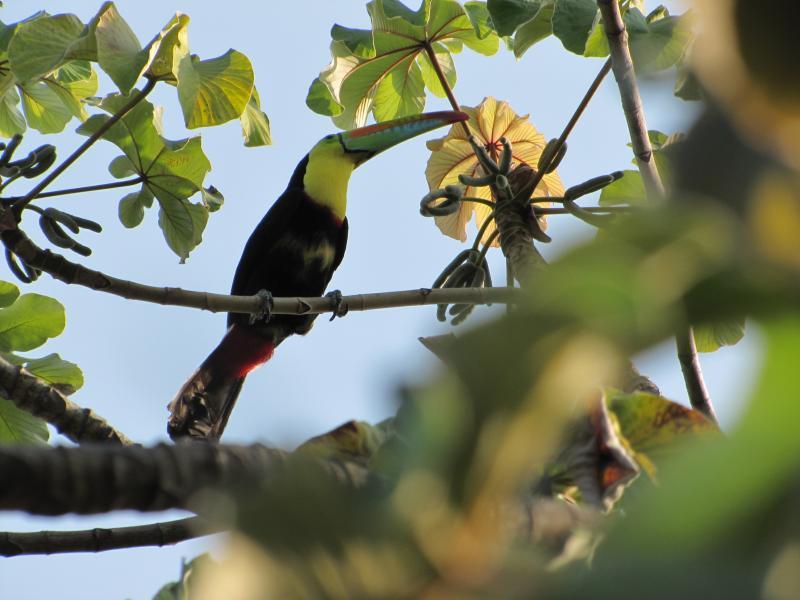 Sol de Minca Reserve Natural