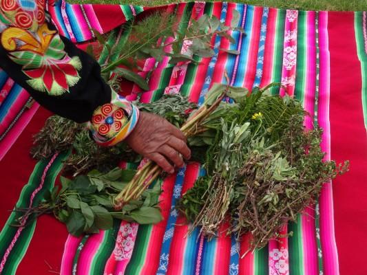 Plantes medicinales Paramis